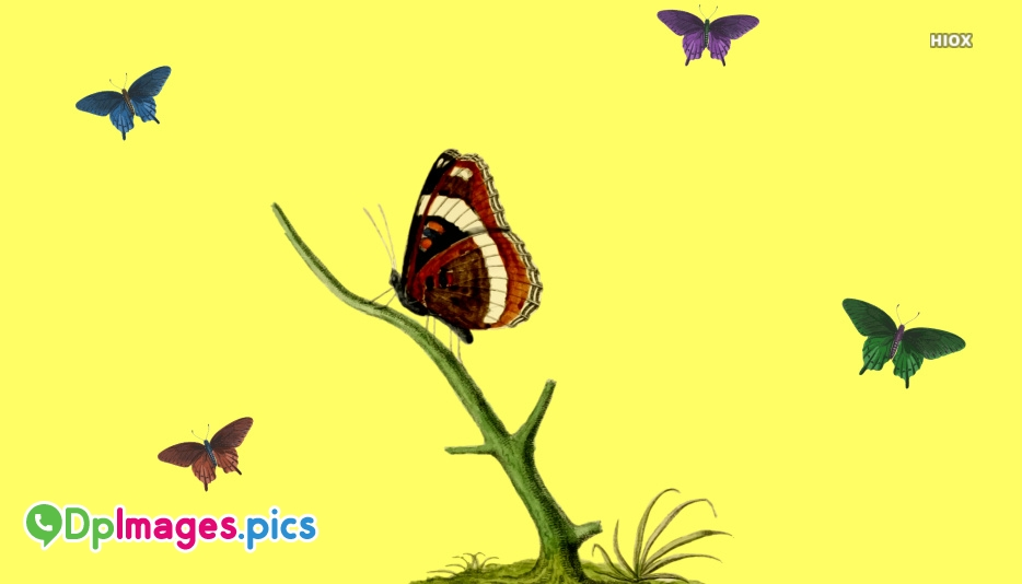 Butterfly Pics For Whatsapp Dp